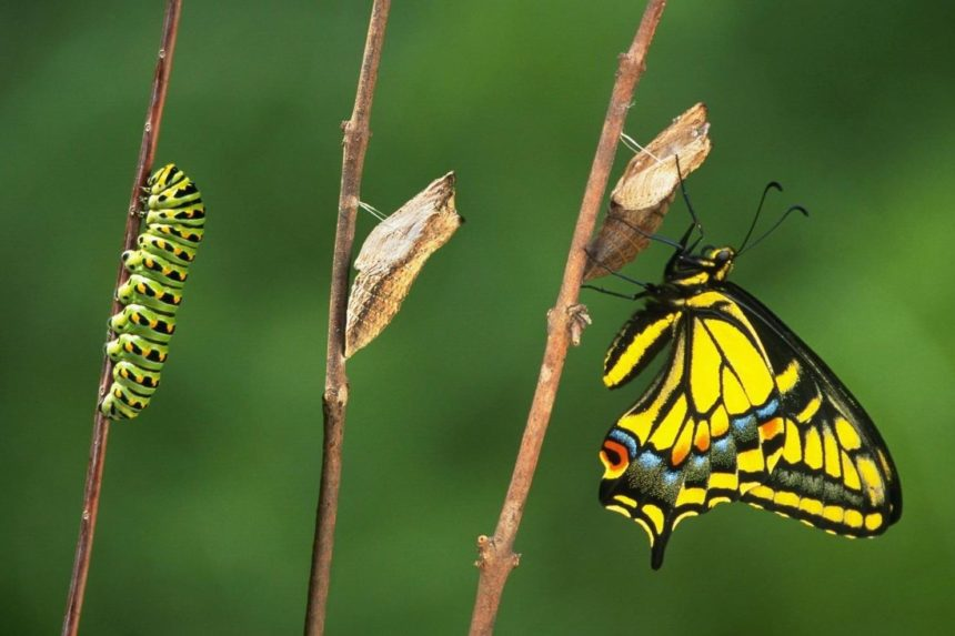 """Trasformarsi in farfalla – Tratto da """"La pedagogia iniziatica"""" di O. M. Aivanhov"""